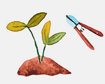Odstranjevanje invazivnih tujerodnih rastlin